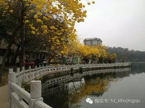惠州秋天风景图片